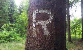 Alt wie ein Baum wierd mann..........